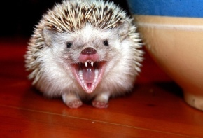 Fighting with Hedgehogs – How to complain about your child's SEN Support